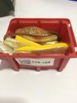 Goldgrube Anzeige